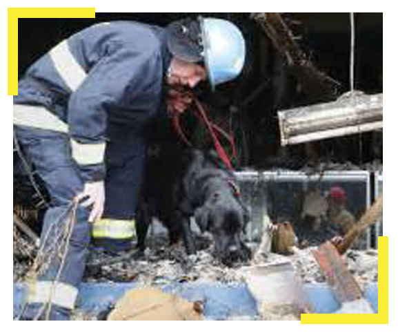 arson certification test for dogs