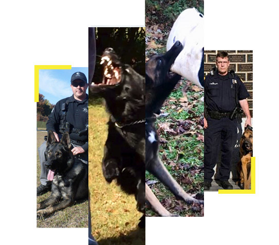 patrol certification test for dogs